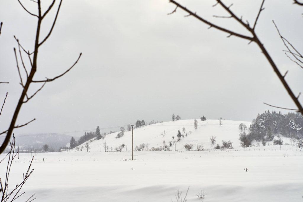 Valea Zimbrilor